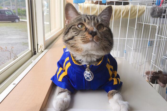 猫店長ギャラリー