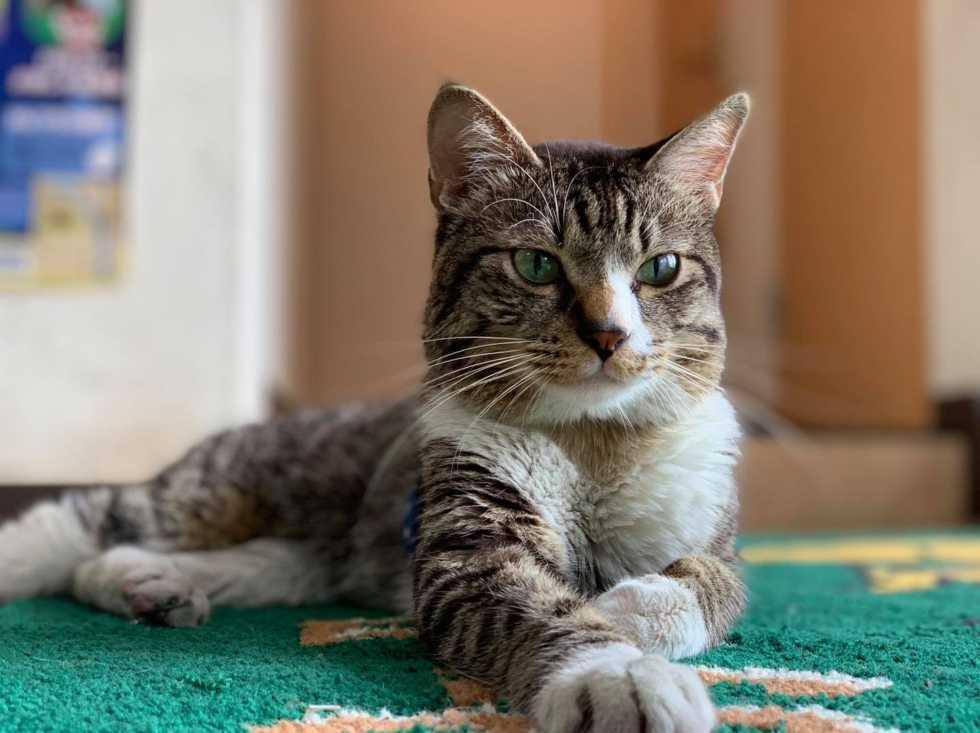 【ご挨拶】猫店長スマイルが天国に旅立ちました